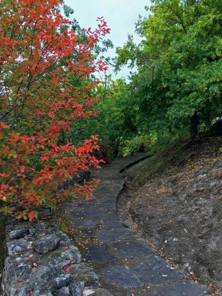 Jardin-camino-IMG_2366-copia