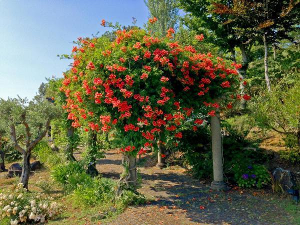 Jardin-camino-IMG_6995