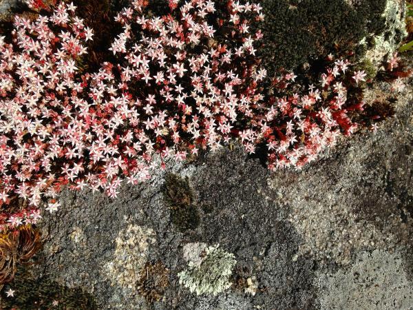 Jardin-detalles-IIMG_6071
