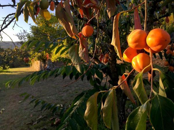 Jardin-frutos-IMG_2445
