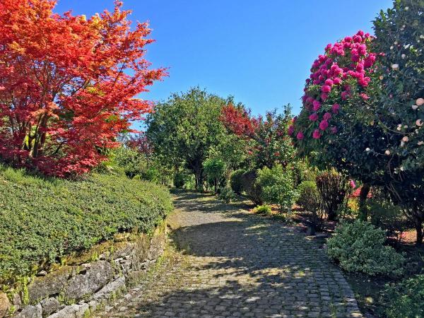 Jardin-trasera-IMG_0541